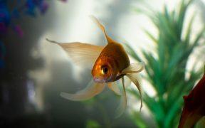 Comment aider à garder vos poissons de compagnie en vie ?